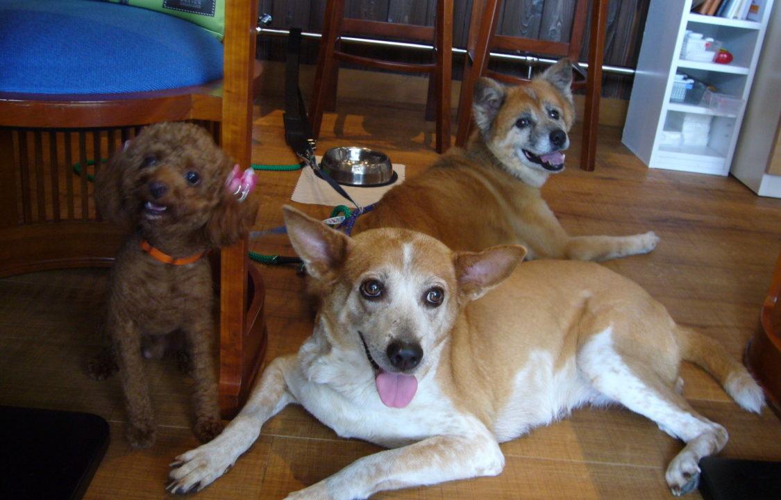 ロイドライトでくつろぐ愛犬たち