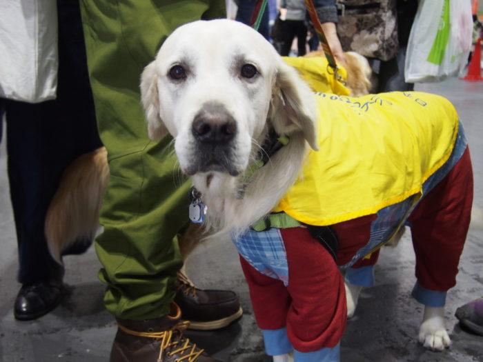 モンベルフレンドフェア かわいい犬