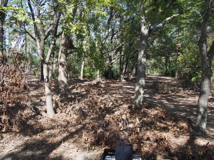 20181021大泉緑地 倒木いっぱい
