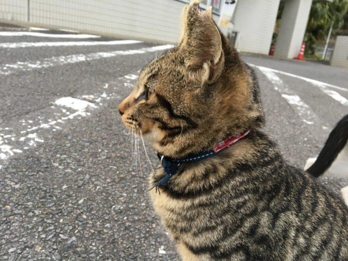 2018-11-08宮崎 キジネコの横顔