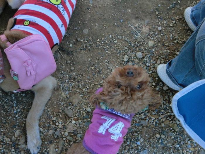 20110923アウトドアベース犬山キャンプ場 見上げるマオ