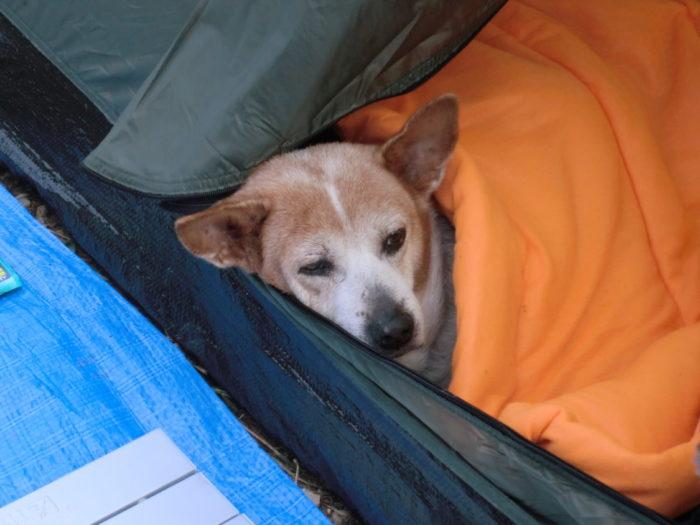 20120922犬山キャンプ場 二度寝レナ