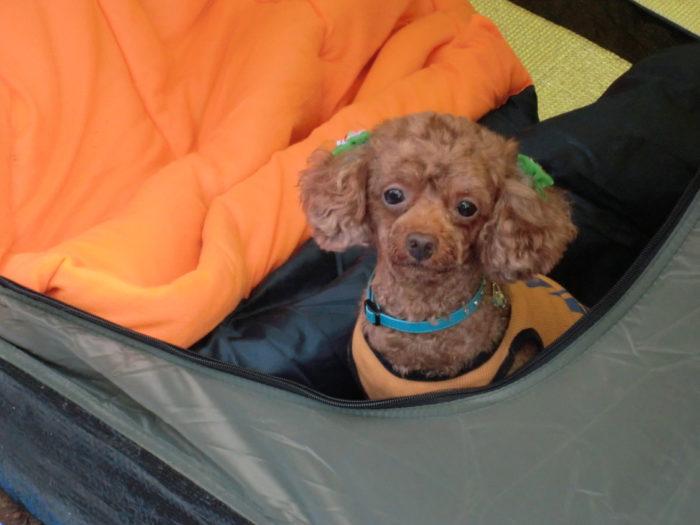 20120922犬山キャンプ場 首をかしげるマオ
