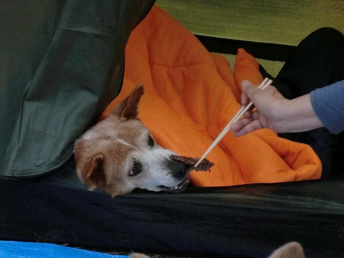 20120922犬山キャンプ場 肉にかぶりつく寸前のレナ