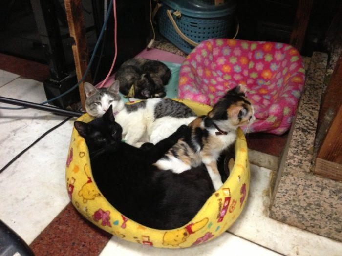 カフェテラス空 仲良く寝る猫たち