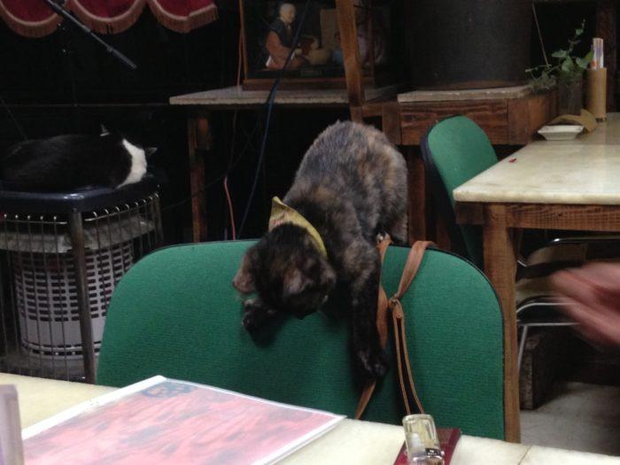 カフェテラス空 カバンの紐で遊ぶ猫