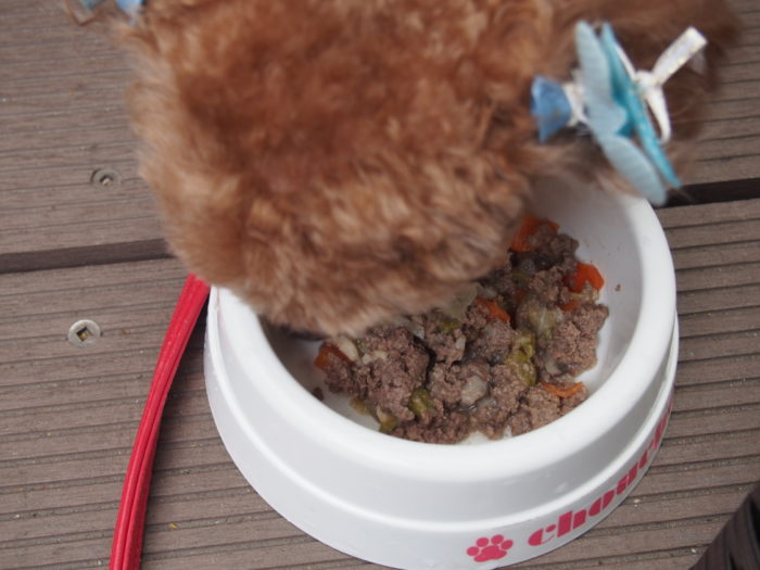 Seaside CAFE 散歩道 馬肉を食べるマオ