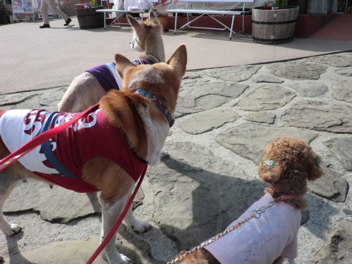 同じ方向を見る犬たち
