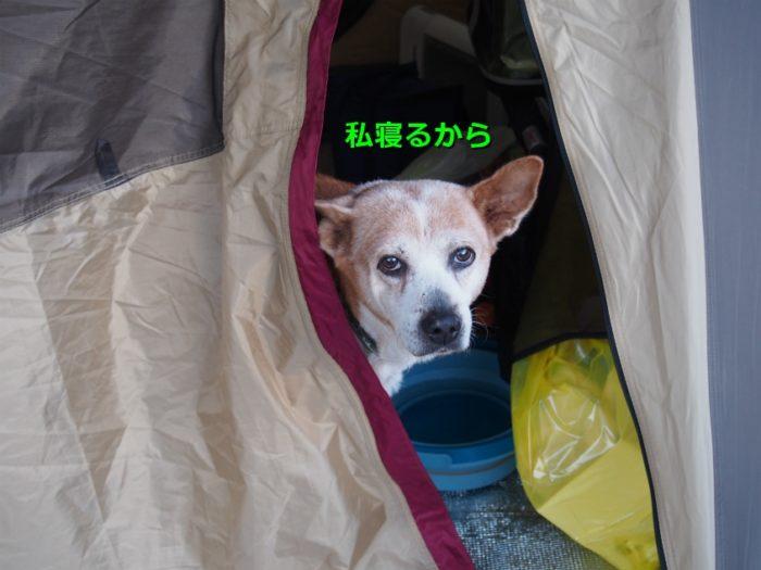 N.E.W奥長良キャンプ場 テントで寝そうなレナ