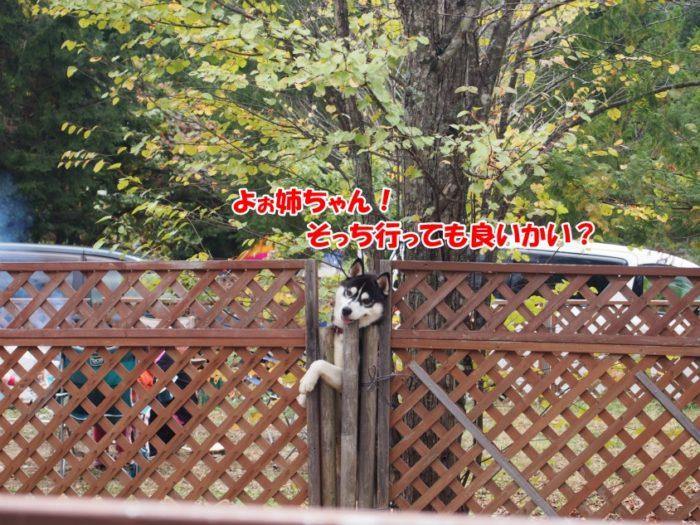N.E.W奥長良キャンプ場 隣の犬
