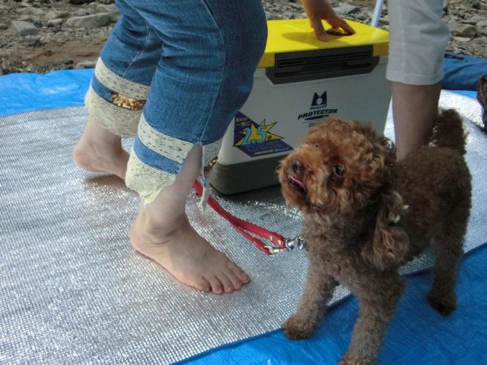 20120623滝畑湖畔バーベキュー場 ベロを出すマオ