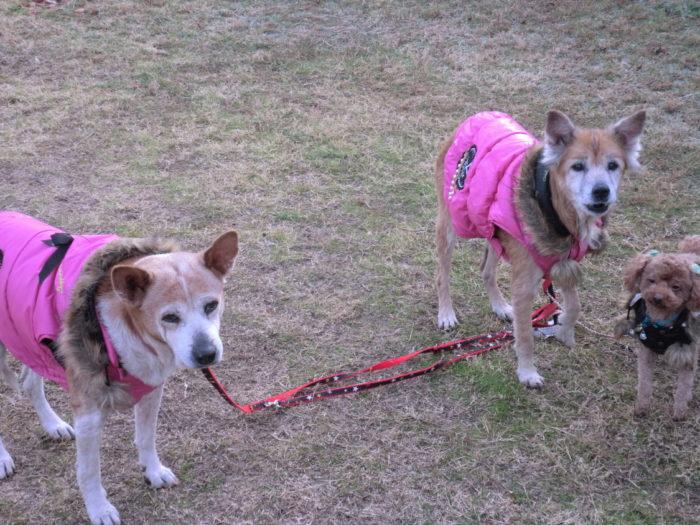 20130113じゃのひれ 寒そうな犬たち