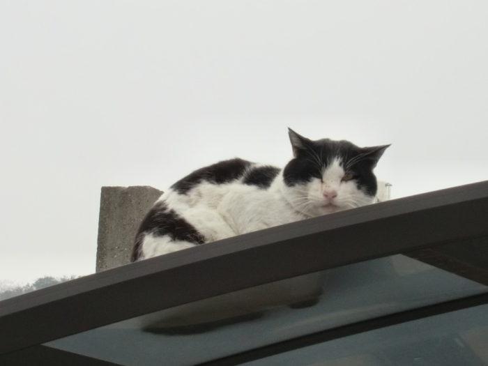 20130113スマートに行く途中で見かけた猫