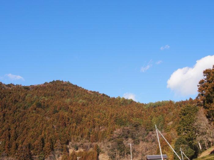 はるの川音の郷 サイトから見える山の景色
