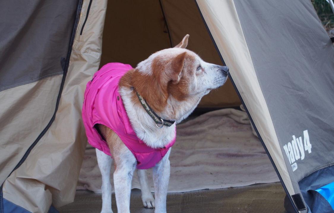 はるの川音の郷 テントに居座るレナ