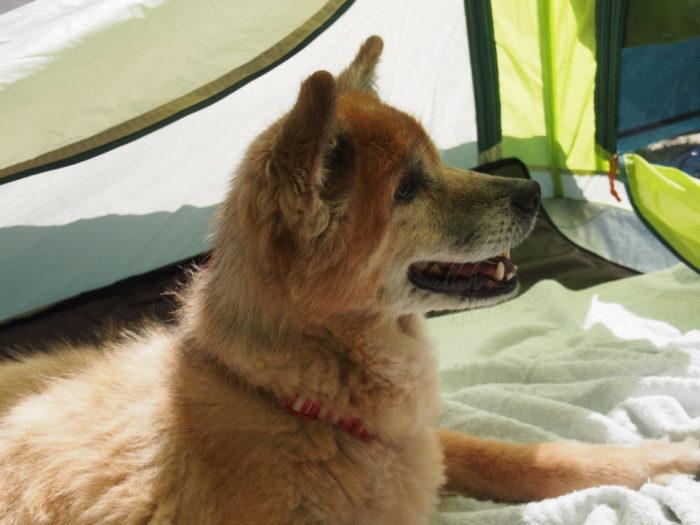 紀州加太オートキャンプ場 はあはあ言ってるランの横顔