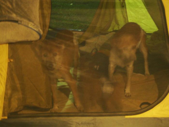 アイリスパーク テント内からこっちを見るレナ