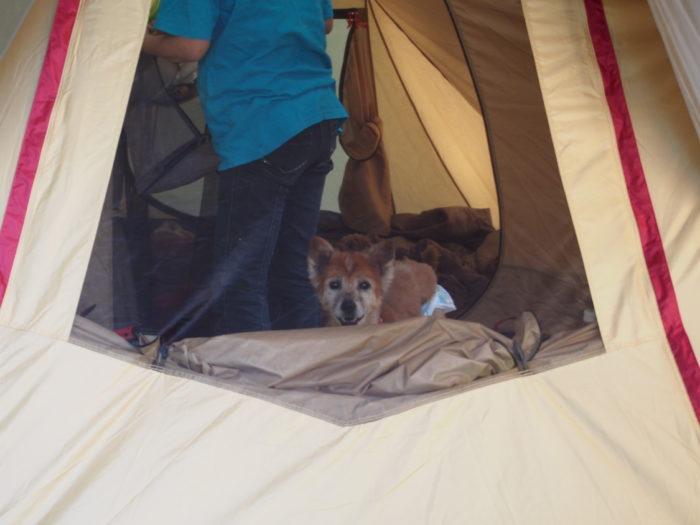 アイリスパーク テントからちょこっと見てるラン