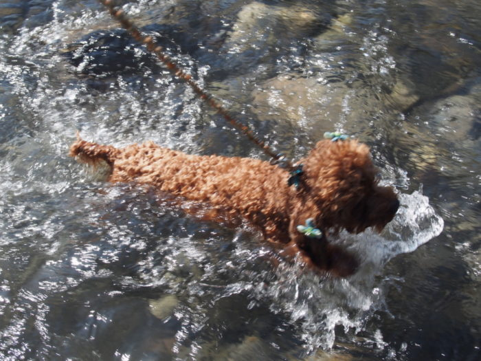 アイリスパーク 川で泳ぐマオ