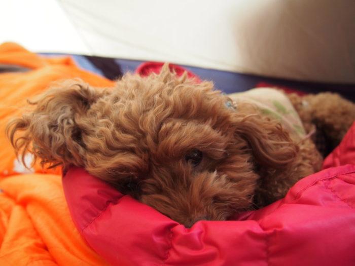 高ソメキャンプ場 寝転がってるマオ