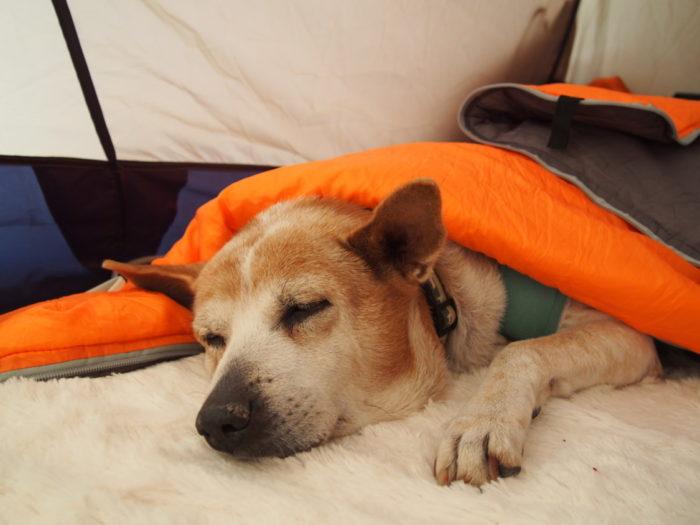 高ソメキャンプ場 寝袋をかぶるレナ