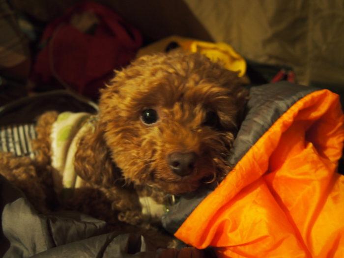 高ソメキャンプ場 寝袋とマオ
