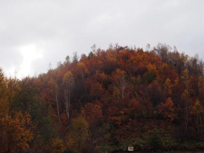 高ソメキャンプ場 山の紅葉