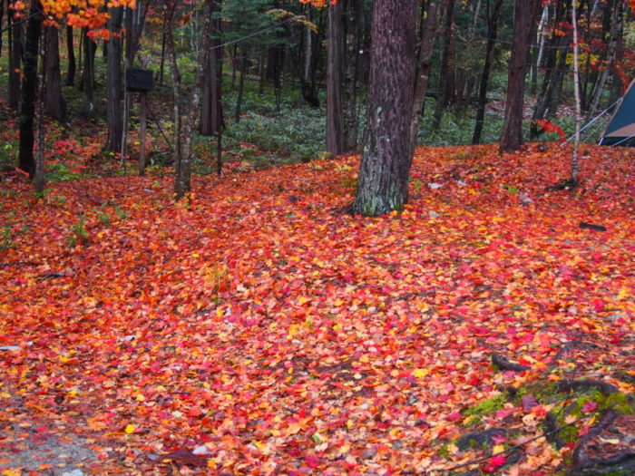 高ソメキャンプ場 紅葉の絨毯
