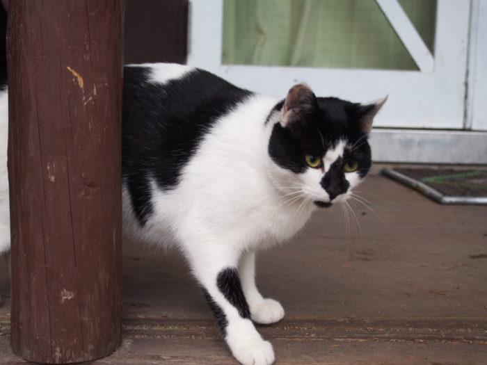 高ソメキャンプ場 こっちに来る猫