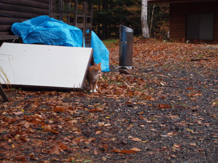 高ソメキャンプ場 こちらに来る猫