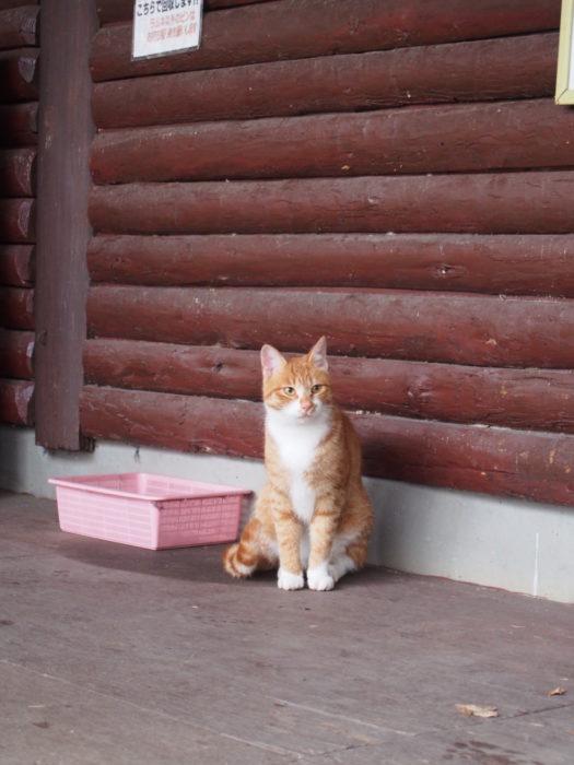 高ソメキャンプ場 おすわりしてる猫