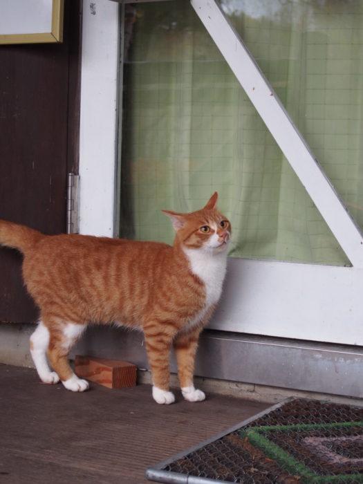 高ソメキャンプ場 管理棟前の猫