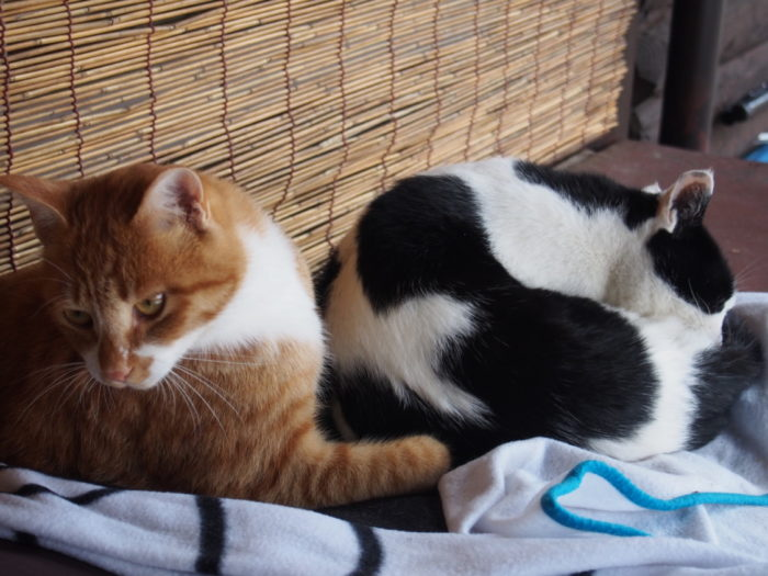 高ソメキャンプ場 寝てる猫