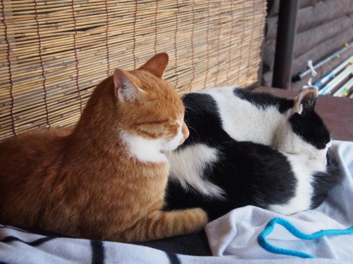 高ソメキャンプ場 仲良し猫
