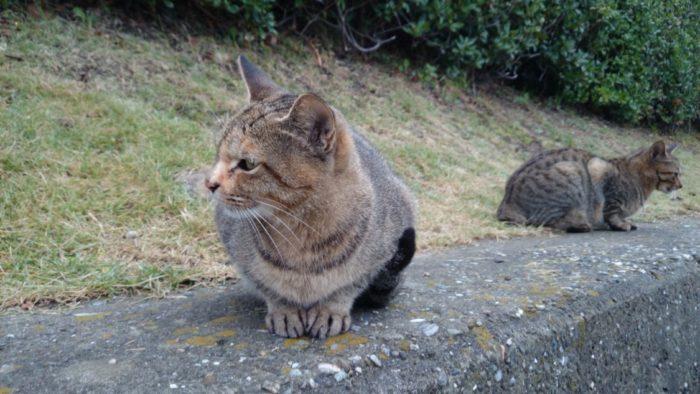 2014-10-22 南淡路シーサイドキャンプ場 野良猫