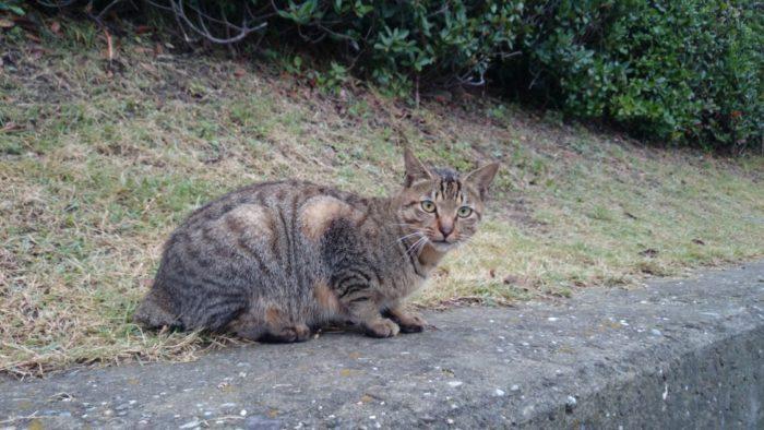 2014-10-22 南淡路シーサイドキャンプ場 逃げ腰の野良猫
