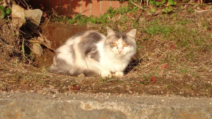 2014-10-23 南淡路シーサイドキャンプ場 可愛い野良猫