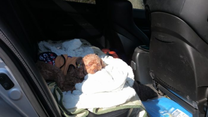 2014-10-24 南淡路シーサイドキャンプ場 車で寝るマオ