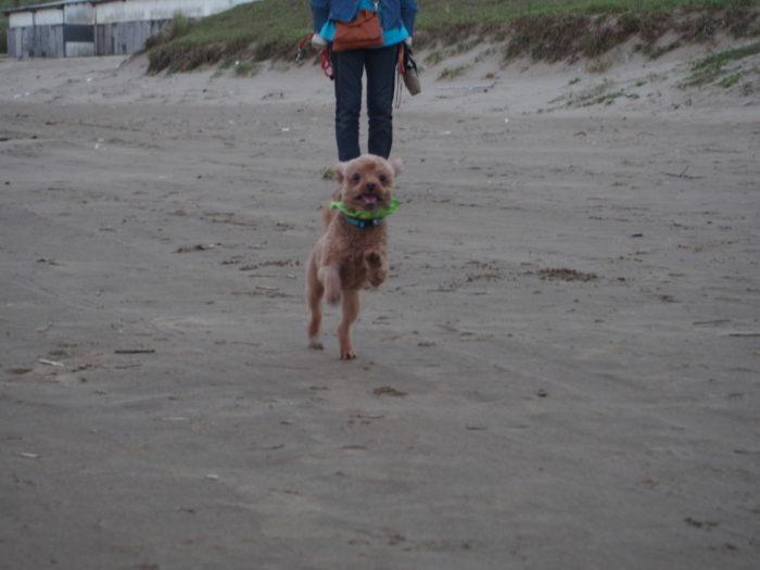 砂浜ではしゃぐマオ