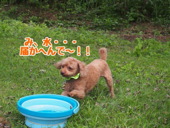 2014-09-13鉢ヶ崎オートキャンプ場 水を飲みたいマオ