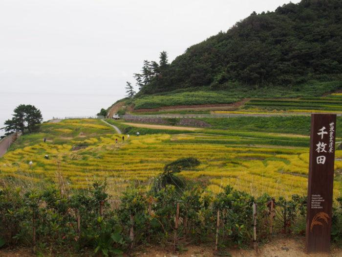 2014-09-15 道の駅千枚田ポケットパーク 世界農業遺産