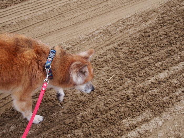 2014-09-15 千里浜なぎさドライブウェイ 散歩するラン