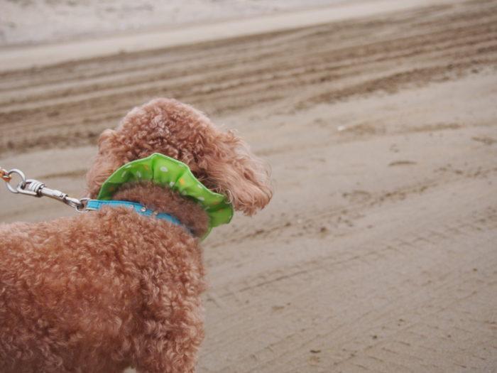 2014-09-15 千里浜なぎさドライブウェイ マオの後ろ姿