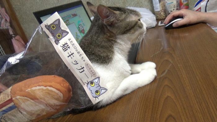 にゃごみ処猫キッカー初導入