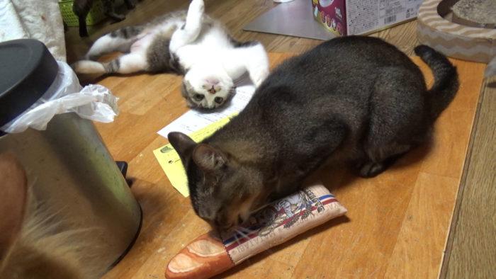 にゃごみ処猫キッカーに興味津々