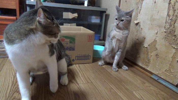 にゃごみ処猫キッカー 争奪戦