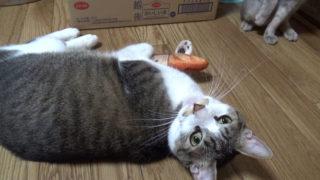 にゃごみ処猫キッカー確保