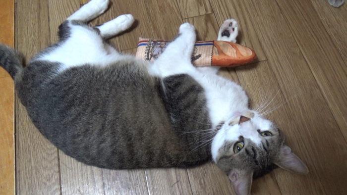 にゃごみ処猫キッカー 満足げ