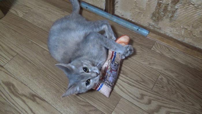 にゃごみ処猫キッカー 優雅に蹴り