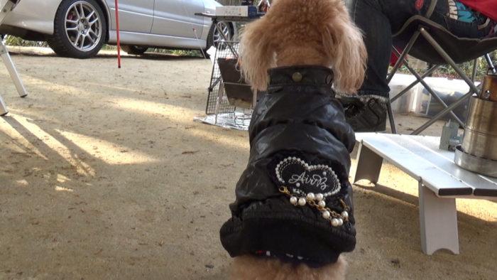 2019-12-14 木もれ陽の森 ダウンジャケットを着た犬